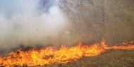 الحرائق تلتهم 210 شجرة زيتون في جنين