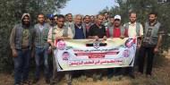 """بالصور.. """"إصلاحي فتح"""" ينفذ فعالية جني ثمار الزيتون شمال غزة"""