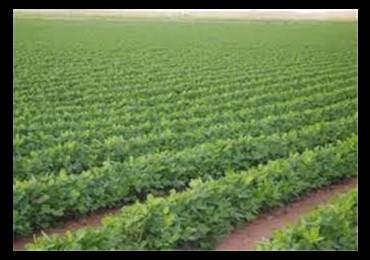 زراعة غزة ترفض اشتراطات الاحتلال لعرقلة تسويق المنتجات الزراعية