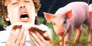 صحة رام الله تسجل 70 حالة إصابة بانفلونزا الخنازير منذ سبتمبر الماضي